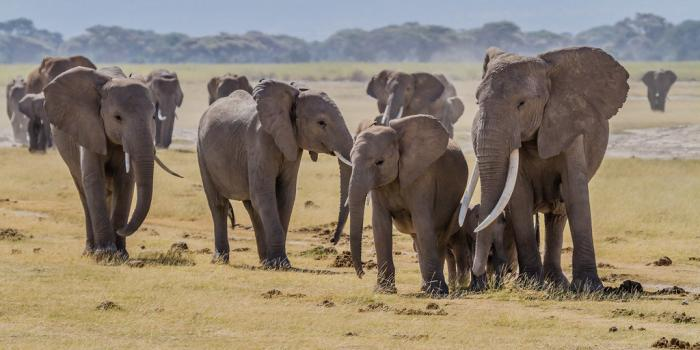 group of elephants of varying ages and sizes
